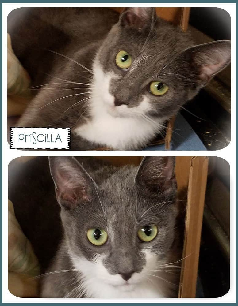 Priscilla is being showcased at the Petco in Feasterville, PA