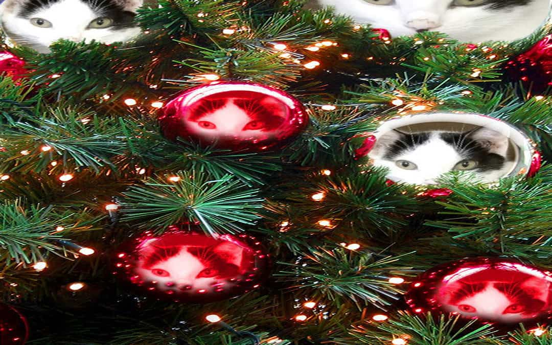 Holiday Greetings – Our Holiday Hours